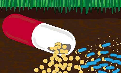 باکتری پاک کننده آنتی بیوتیک