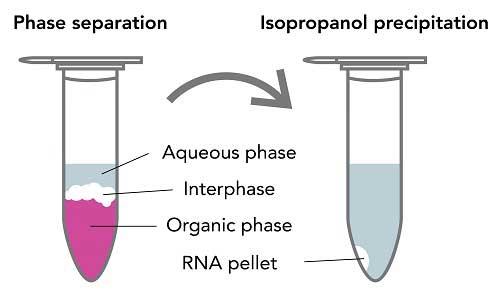 استخراج RNA با ترایزول (TRIzol)