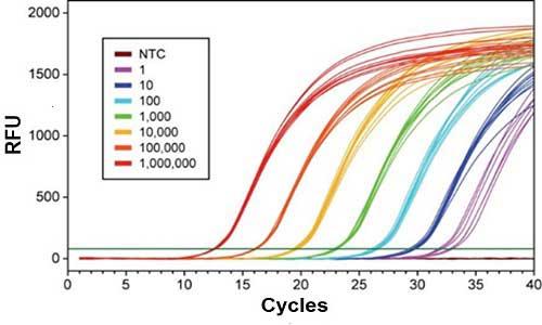اصول کار Real time PCR