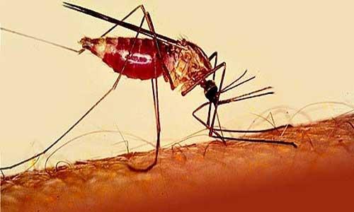 دو واکسن بهتر از یک واکسن برای مالاریا