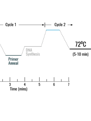MB_pcr_cycle_settings-Copy.png