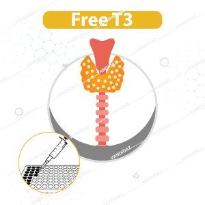 تست Free T3