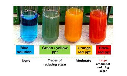 آزمون بندیکت برای آزمایش کربوهیدرات های ساده