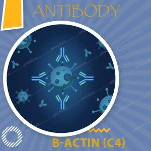 فروش پروتیین بتا اکتین Anti B-actin (C4)