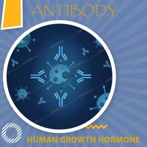 فروش آنتی بادی هورمون رشد انسانی