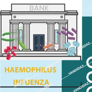 فروش سوش هموفیلوس آنفلوانزا