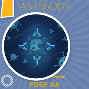 فروش آنتی بادی Anti-PDGF AA