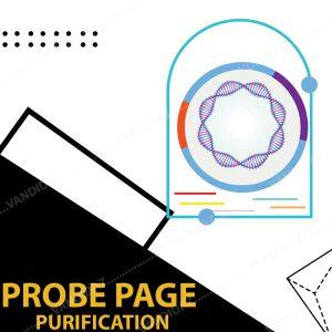 فروش پرایمر Probe PAGE