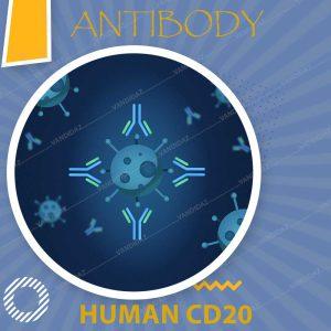 فروش آنتی بادی گیرنده CD20 انسانی ثانویه