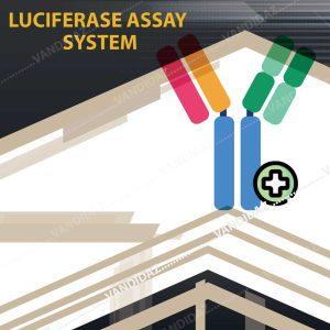 فروش Luciferase assay system