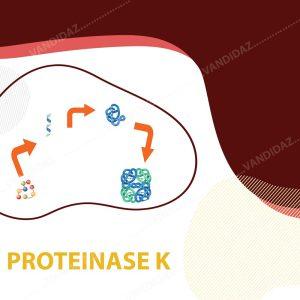 فروش آنزیم پروتئیناز K