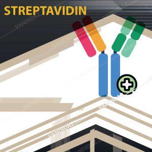 فروش آويدين نشاندار با فيکواريترين (Streptavidin)